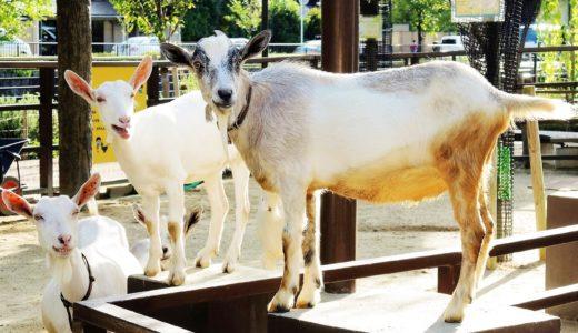 10月4日「世界動物の日」 ヤギさんの「はい、チーズ!」